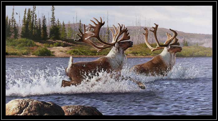 Two bull caribous crossing river