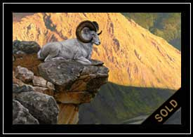 First Light - Dall's sheep