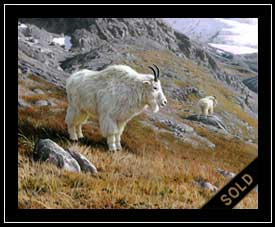 High Country - mountain goats