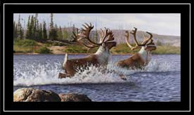 """Caribou Crossing"""