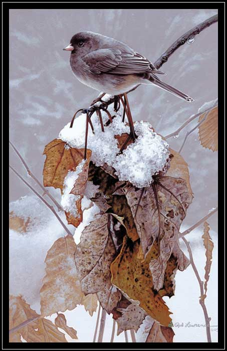 Junco perched on branch with old leaves and melting snow