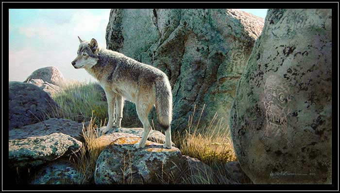 Wolf in rocks with petroglyphs