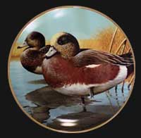 """American Widgeon"" by Rod Lawrence"